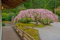 Weeping Cherry Tree, Portland Japanese Garden, Oregon Fine Art Print