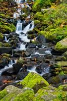 Starvation Creek Falls In Autumn, Columbia Gorge Oregon Fine Art Print
