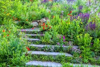 Summer Flowers On Stairs In Pennsylvania Fine Art Print