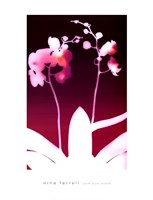 Dark Plum Orchid Fine Art Print