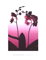 Light Plum Orchid Fine Art Print