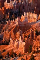 Sunrise Point Hoodoos In Bryce Canyon National Park, Utah Fine Art Print