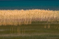 Grasses Blowing In The Breeze Along The Shore Of Bear Lake, Utah Fine Art Print