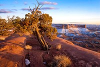 Overlook Vista At Canyonlands National Park, Utah Fine Art Print