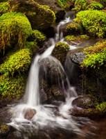 Creek In Sol Duc Valley, Washington Fine Art Print