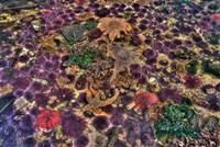 Tide Pool With Marine Life, Salt Creek, Washington State Fine Art Print