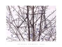 Tour de Tree Fine Art Print