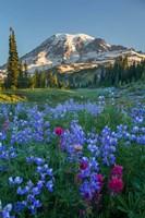Wildflowers And Mt Rainier At Mazama Ridge Fine Art Print