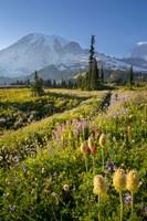 Paradise Area Landscape Of Mt Rainier National Park Fine Art Print