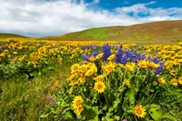 Spring Wildflowers Cover The Meadows At Columbia Hills State Park Fine Art Print