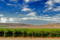 Mattawa Vineyard On The Wahluke Slope Fine Art Print