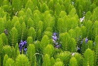 Horsetail, Wild Hyacinth, And Grays Harbor Fine Art Print