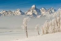 Rimed Cottonwoods And Tetons From The Antelope Flats Road Fine Art Print