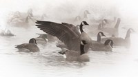 Artistic Shot Of Canadian Geese In The Mist Fine Art Print