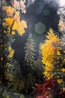 Sunshine On An Autumn Forest Fine Art Print