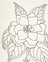 Gardenia Line Drawing Crop Fine Art Print