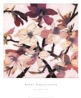 Magnolias XX Fine Art Print