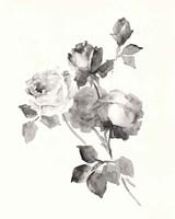 Rose Blossoms Gray Fine Art Print