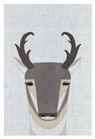Pronghorn Antelope Fine Art Print