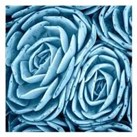 Nestled Succulents Fine Art Print