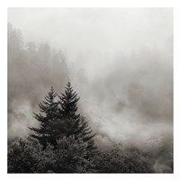Rising Mist, Smoky Mountains Fine Art Print
