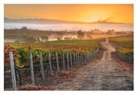 Vineyard Sunrise Fine Art Print