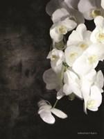 Contemporary White Orchids Fine Art Print