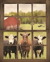 Three Moo View Fine Art Print
