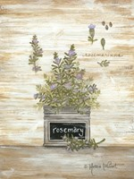 Rosemary Botanical Framed Print