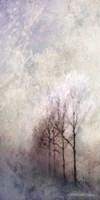 First Light Winter Forest Fine Art Print