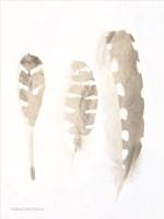 Neutral Feathers Study Fine Art Print