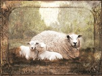 Vintage Ewe and Sleeping Lambs Fine Art Print