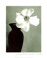 Single Anemone Fine Art Print