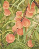Peach Perfect Fine Art Print