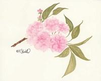 Bashful Blossoms Fine Art Print