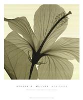 Hibiscus Fine Art Print