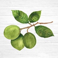 Citrus Garden II Shiplap Fine Art Print