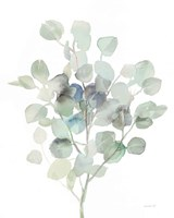 Eucalyptus III Cool Fine Art Print