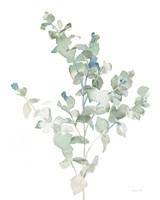 Eucalyptus II Cool Fine Art Print