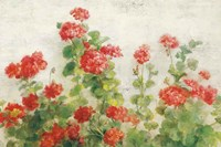 Red Geraniums on White v2 Fine Art Print