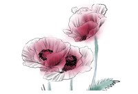 Sketched Poppies 1 Fine Art Print