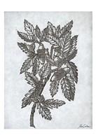 Oak Tree 1 Fine Art Print