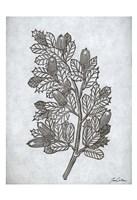 Oak Tree 2 Fine Art Print