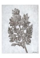 Oak Tree 3 Fine Art Print