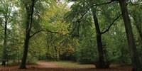 Woods Wanderer 1 Fine Art Print