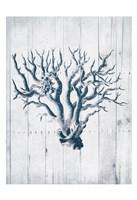 Coral White Wood Mate Framed Print
