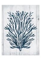 Coral White Wood Forth Framed Print
