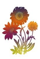 Color Bloom 2 Fine Art Print