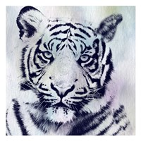 Tiger Roar Fine Art Print
