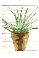 Wood Plant Pot Fine Art Print